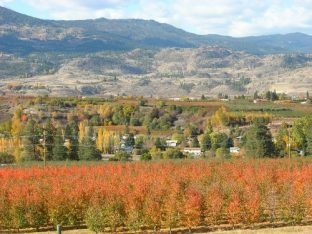 Landschaft in der Okanagan-Region